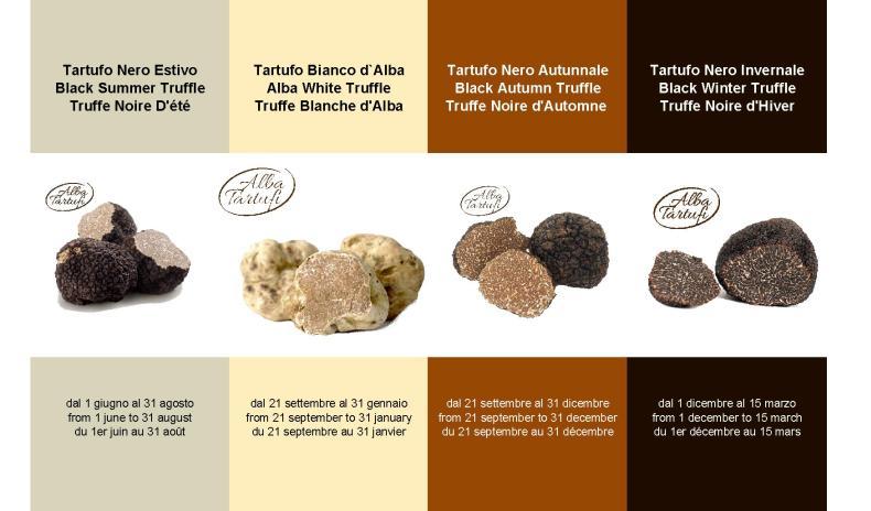 AlbaTartufi - Truffle of Alba (Piedmont - Italy);