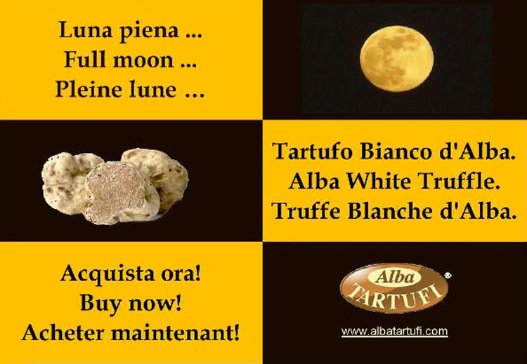 Full moon ... Alba White Truffle. Buy now!