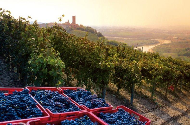 Vino Gourmet Wine Gourmet Vin Gourmand Alba Tartufi